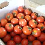 svenska tomater låda Ågården