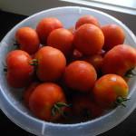 svenska tomater sköljda Ågården
