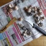 champinjoner rensa