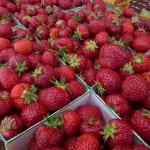 jordgubbar hallandsbär falkenberg