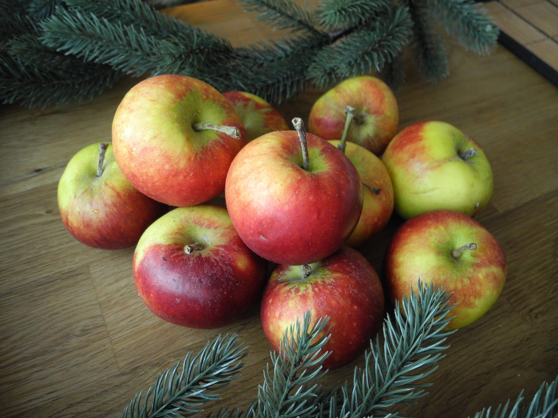 ingrid marie äpple